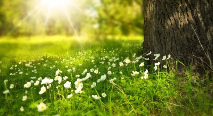 Szkółki drzew i krzewów