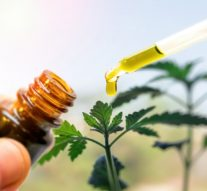 Dlaczego olej CBD powinien być pozyskiwany z całej rośliny?